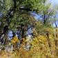 Gradska šuma