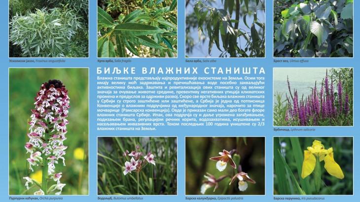 Biljke vlažnih staništa