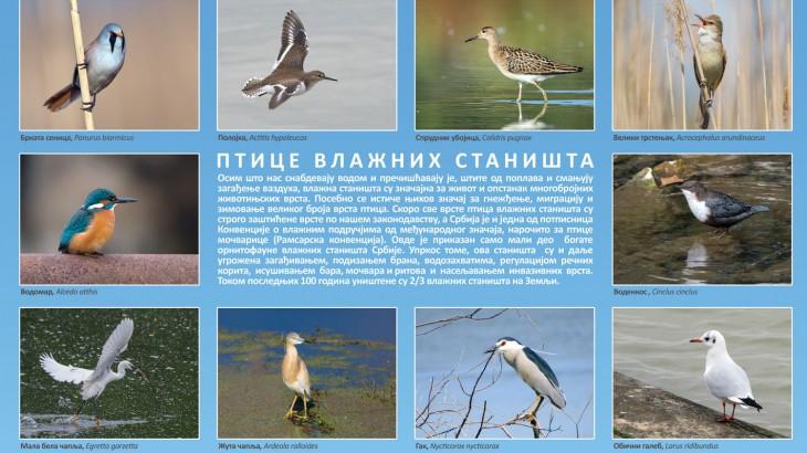 Ptice vlažnih staništa